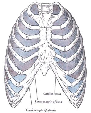 hogyan lehet eltávolítani a helmintákat a tüdőből