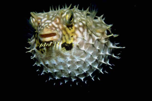 korallbetegségek és paraziták