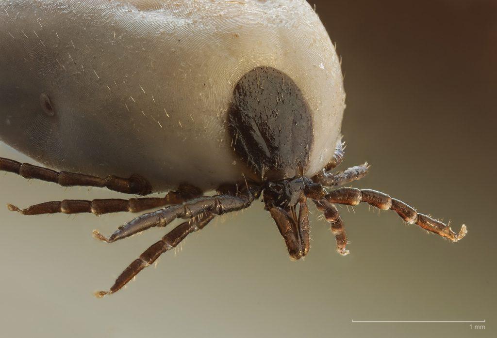 Külső-belső parazita ellenes kezelések - Animal