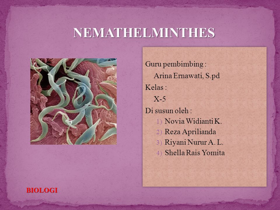 nemathelminthes biologi x