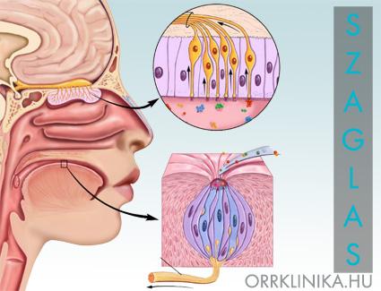 paraziták az orr garat kezelésben)