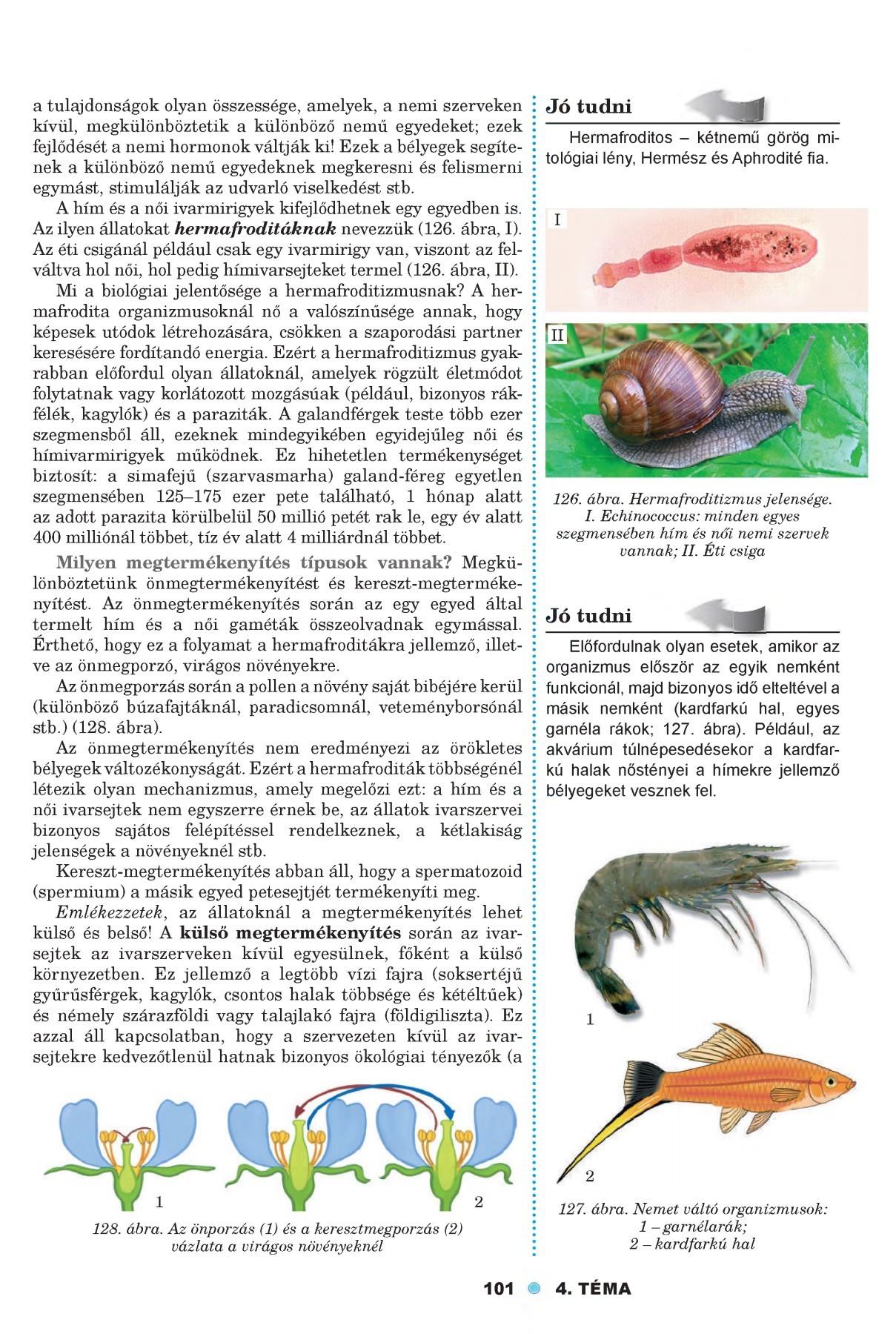 paraziták puhatestűek példái
