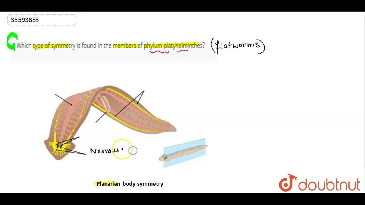 phylum platyhelminthes étrend)
