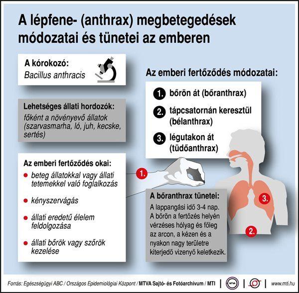 szarvasmarha szalagféreg fertőző betegségek