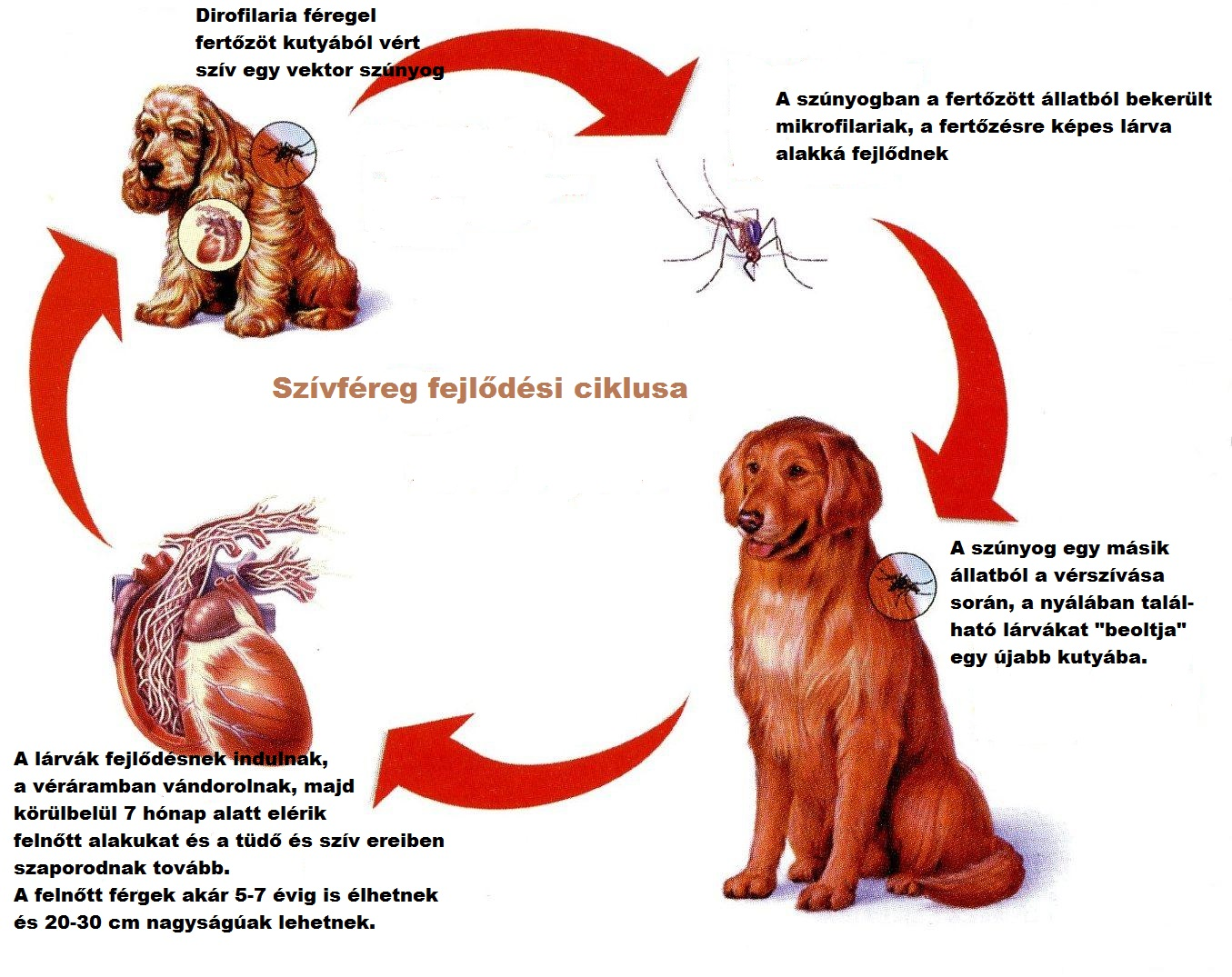 emberi férgek tünetek kezelése gyógyszeres kezelés