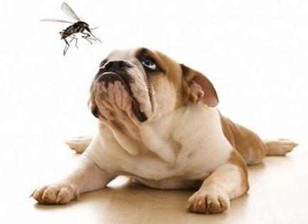 Advocate rácsepegtető oldat kutyáknak - Felelős Állattartás