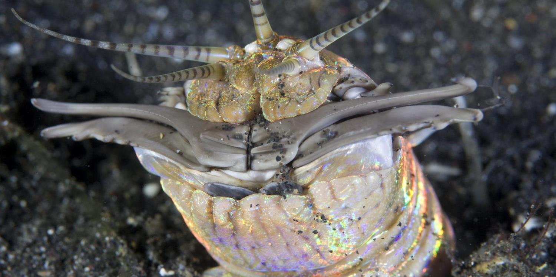 Ez a homok alól, lesből támadó tengeri féreg egy megelevenedett horrorszörny | BEOL