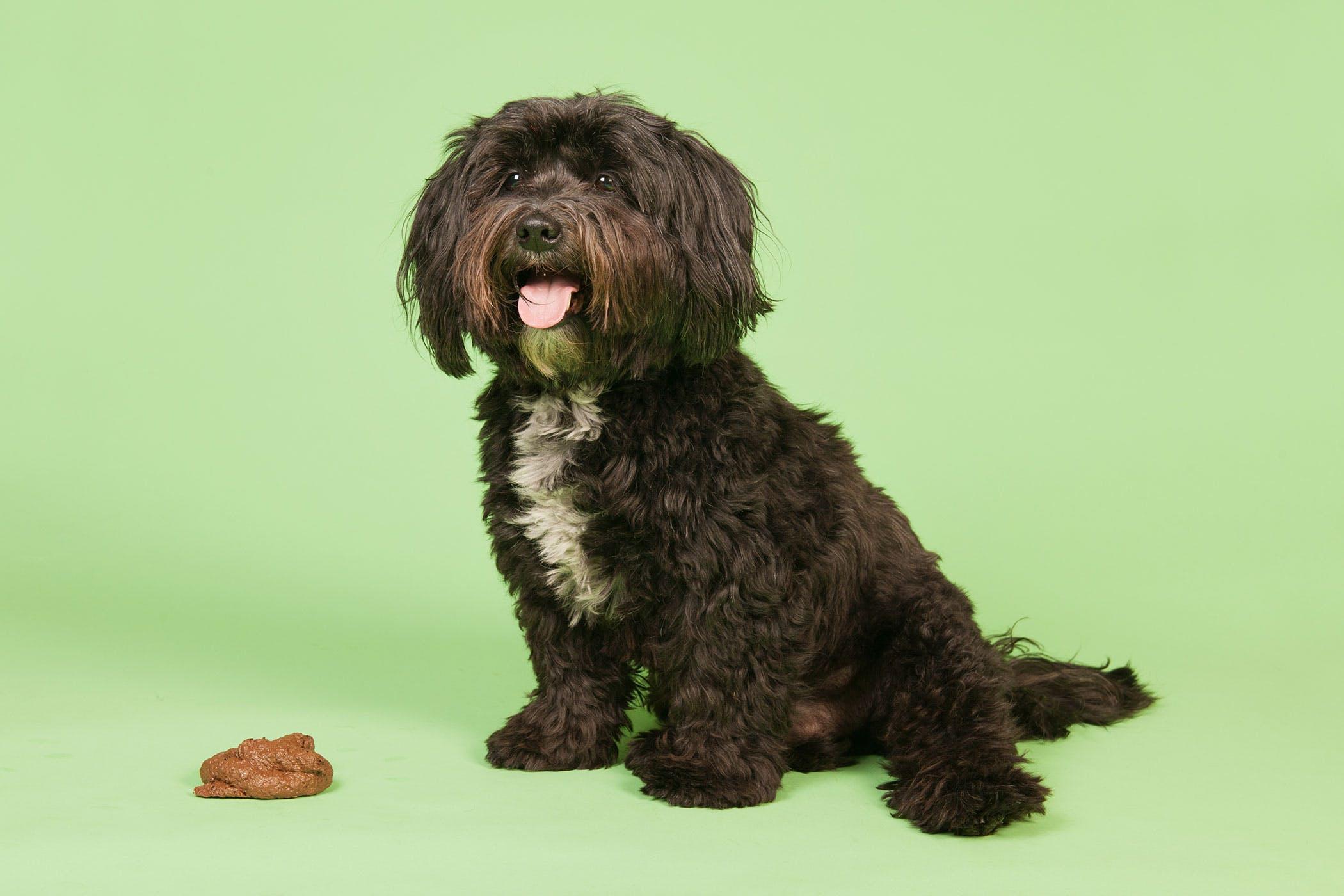 giardia puppy