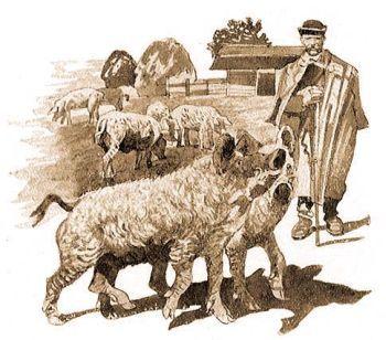 az állatok fajtái)