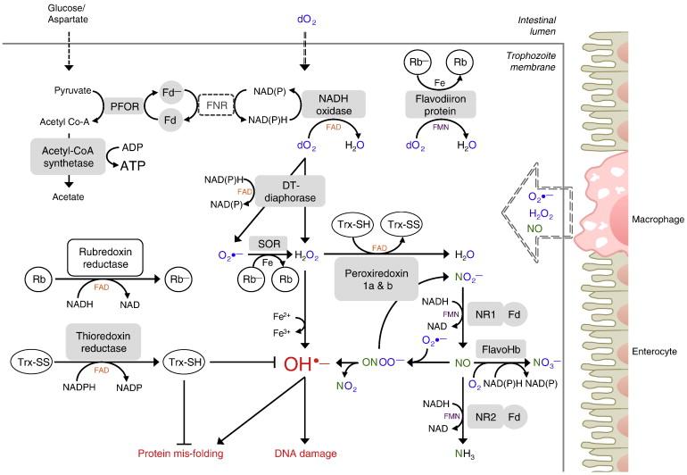 giardia drug resistance