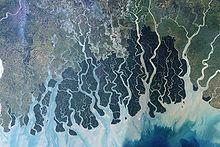 helminthosporium oryzae bengáli éhínség hogyan lehet eltávolítani egy parazitát a szemből