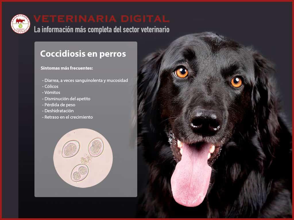 giardia y coccidia en perros)
