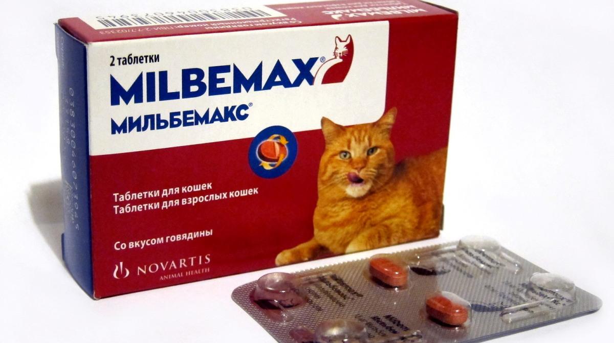a legjobb tabletták mindenféle férgekből)