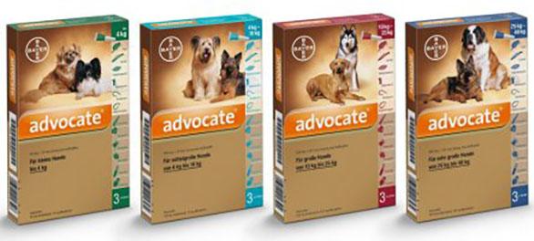 Szívférgesség tünetei és megelőzése Energyvet állatgyógyászati szerekkel