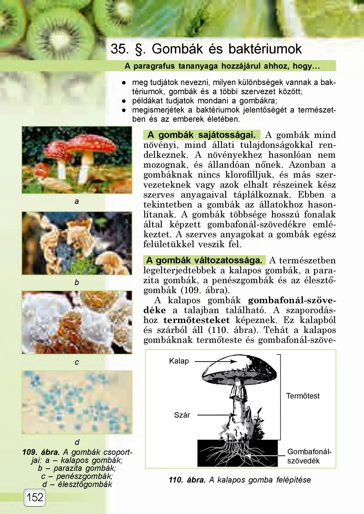 paraziták ragadozók magyarázza)