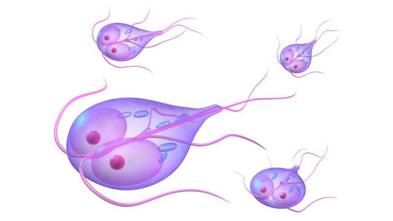 férgek 9 hónapos kisbabában les paraziták streaming