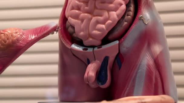Hogyan távolítják el a holt helmintákat a testből