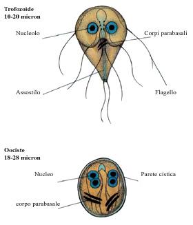 Giardiasis toxikus-allergiás forma ,mi lehetséges a férgektől a gyermekekéhez évente