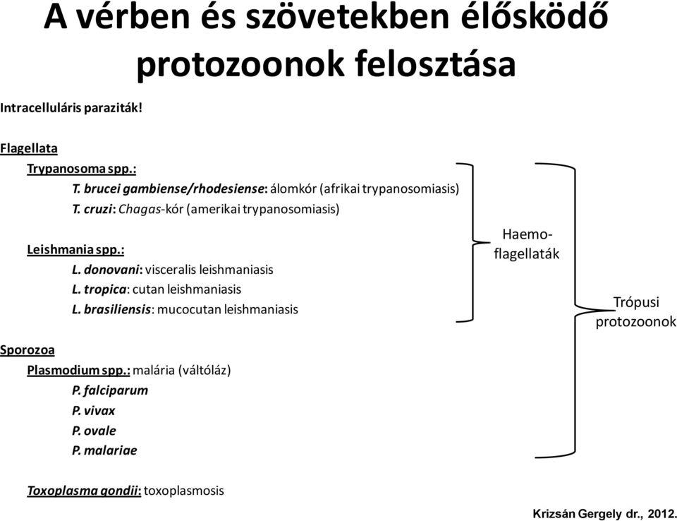 trypanosoma leishmania paraziták)