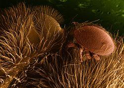 paraziták állatokban képek