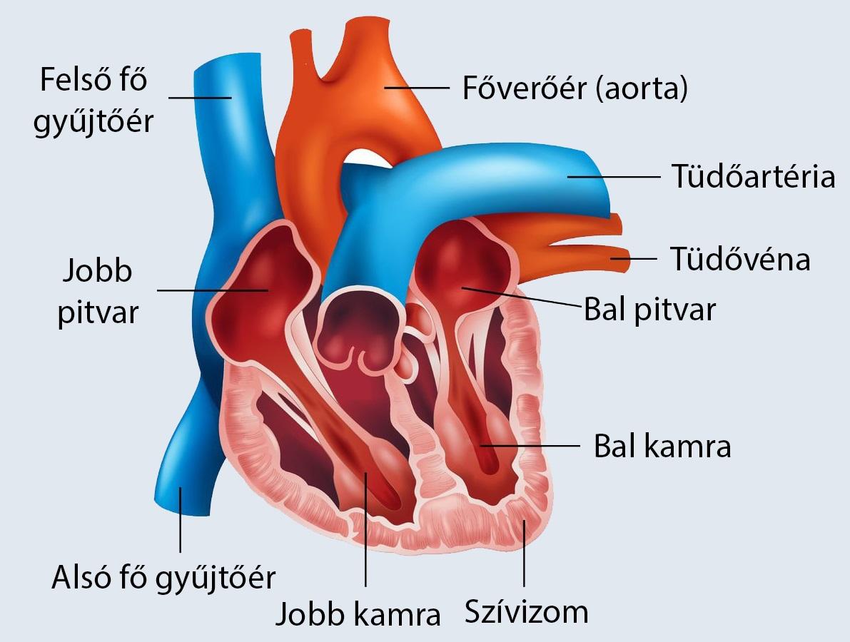 az emberi test tablettáinak kezelése)