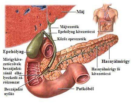 vakbél rosszindulatu daganata