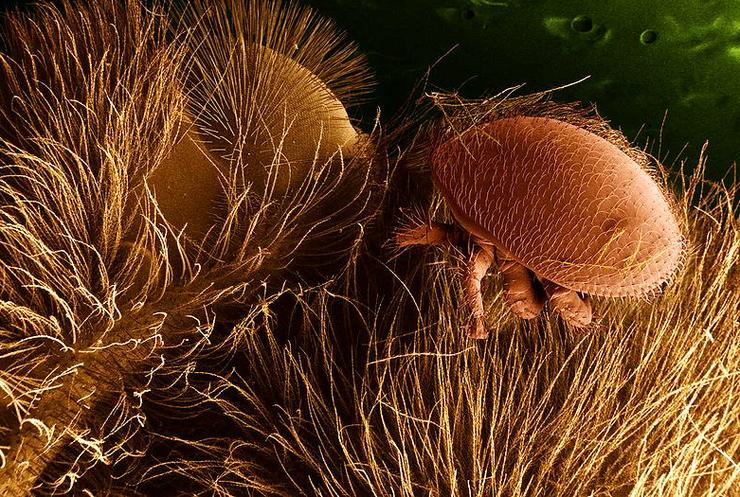 parazita élőhely)