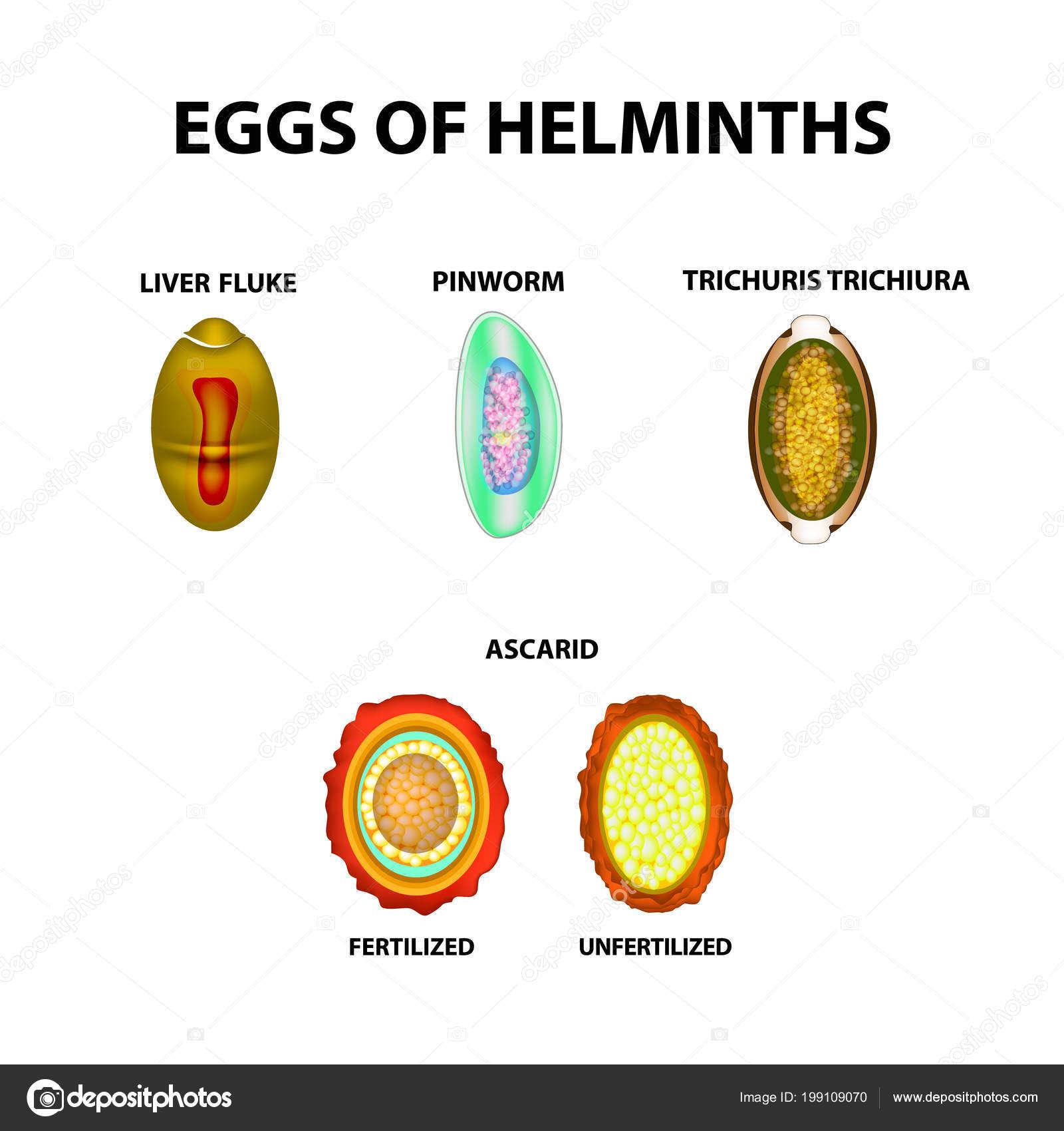 Pinworm helminth tojások ,a féregtojások székletével jár
