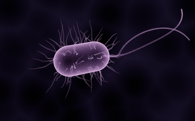 paraziták baktériumok példák)