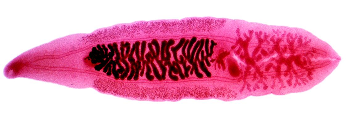 Akvárium karbantartás: paraziták az akváriumban - Gondozás