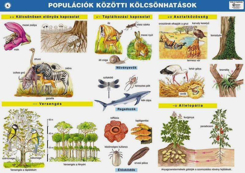 különbség az endoparaziták és az ektoparaziták között)