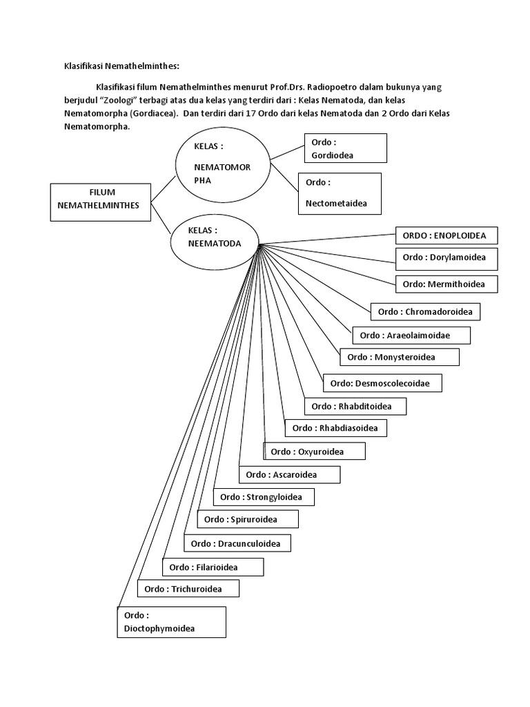 klassifikasi dari nemathelminthes)