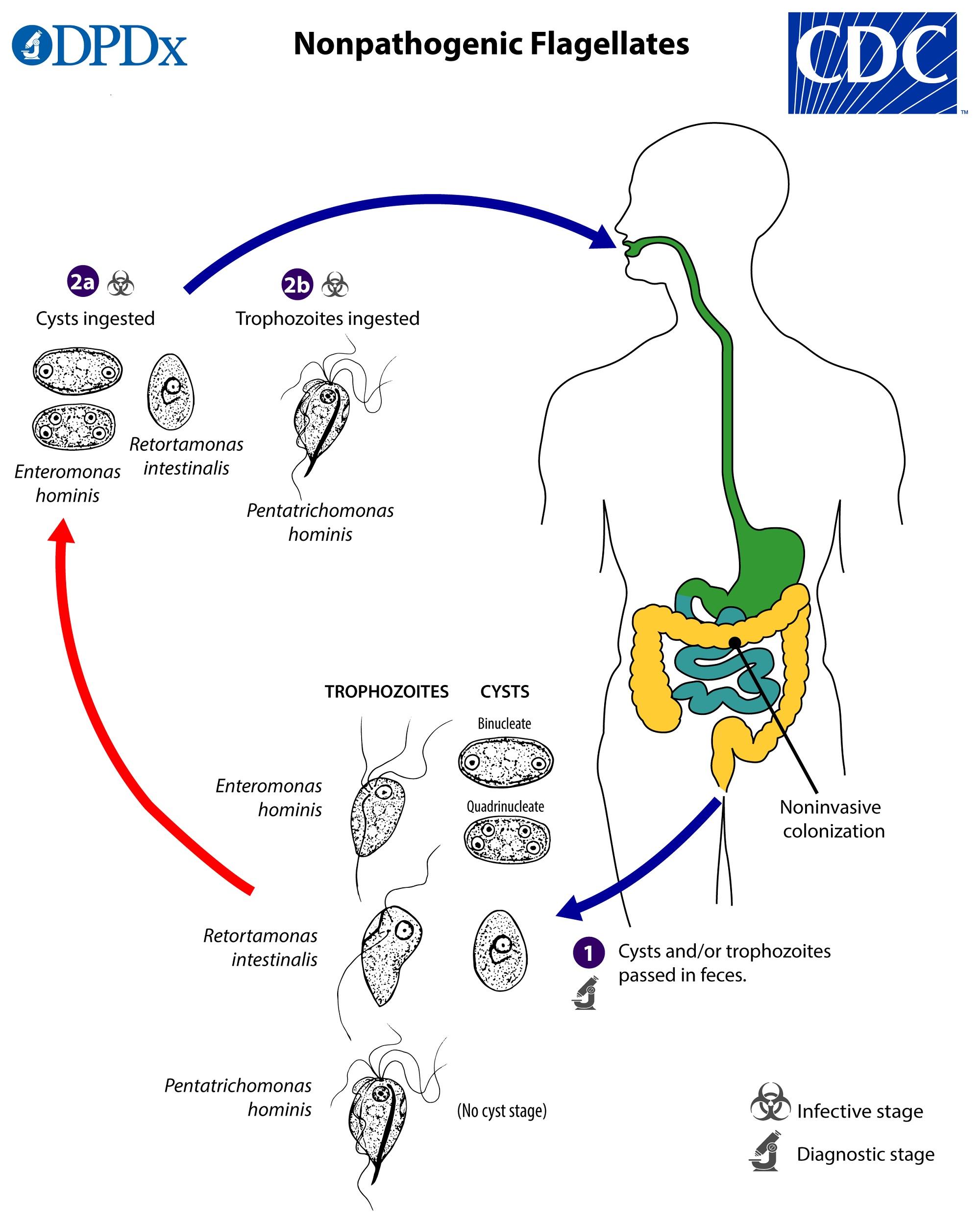 A évi járványügyi-klinikai vegyes bakteriológiai jártassági körvizsgálat értékelése Gacs Mária