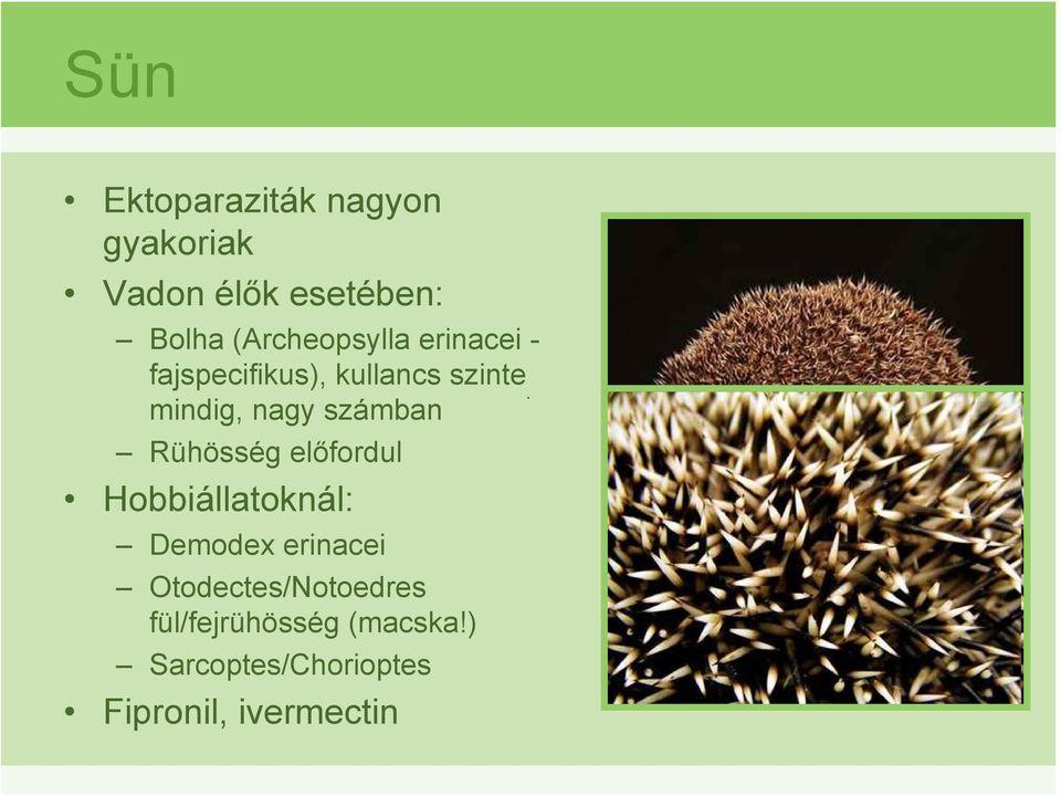 gyakori ektoparaziták nagy állatokban