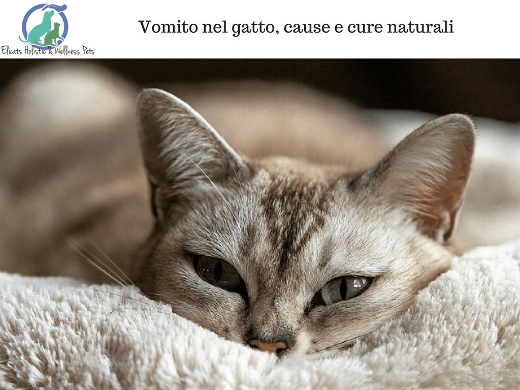 giardia gatto rimedi naturali