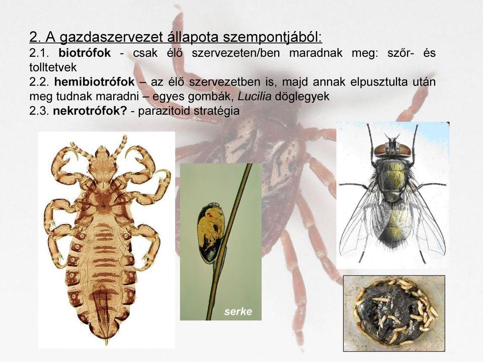 a diphyllobothriasis végleges gazdaszervezet)