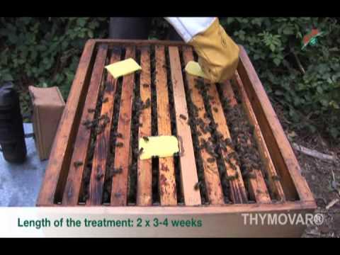 ababakáros paraziták kezelése