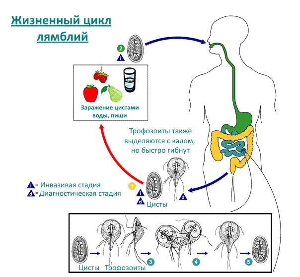 giardiasis oireet