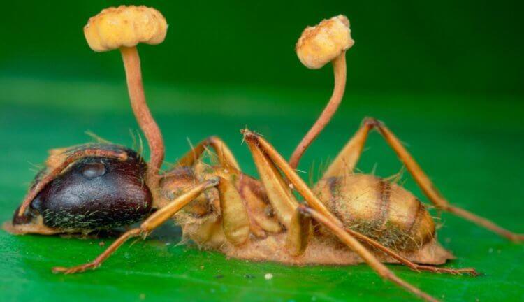 Az ásványvizek parazita testének megtisztítása