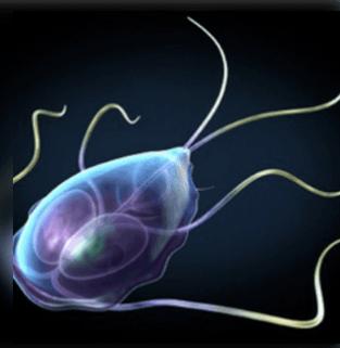 a vízben élő paraziták tünetei