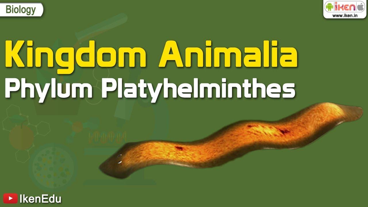 phylum platyhelminthes jelentése