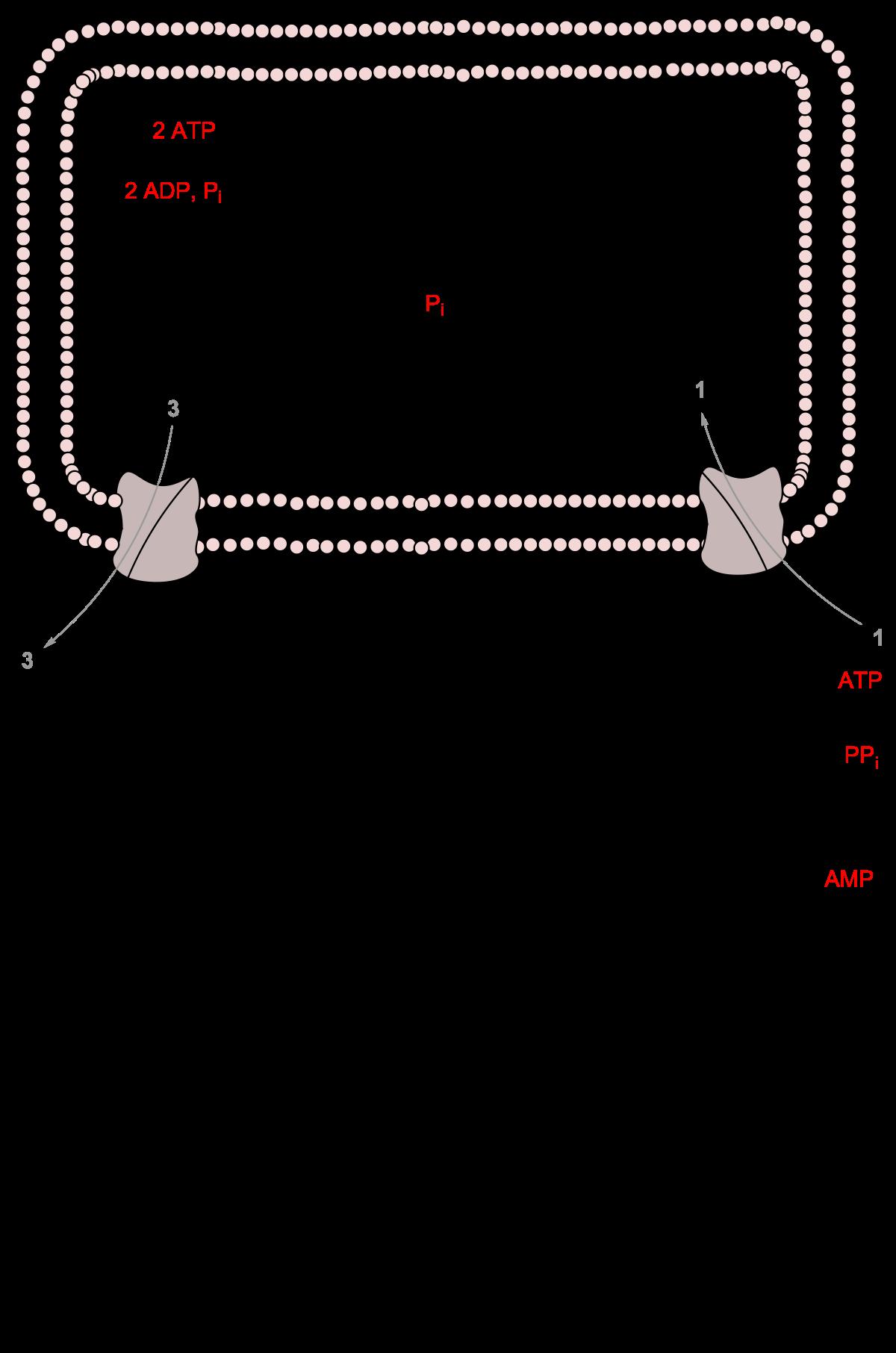 ornitin ammónia paraziták)