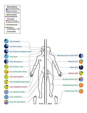 az emberi test gyógyszerei