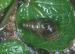 bika szalagféreg megelőzése hogyan kezelhető felnőtteknél a giardiasis drogokkal