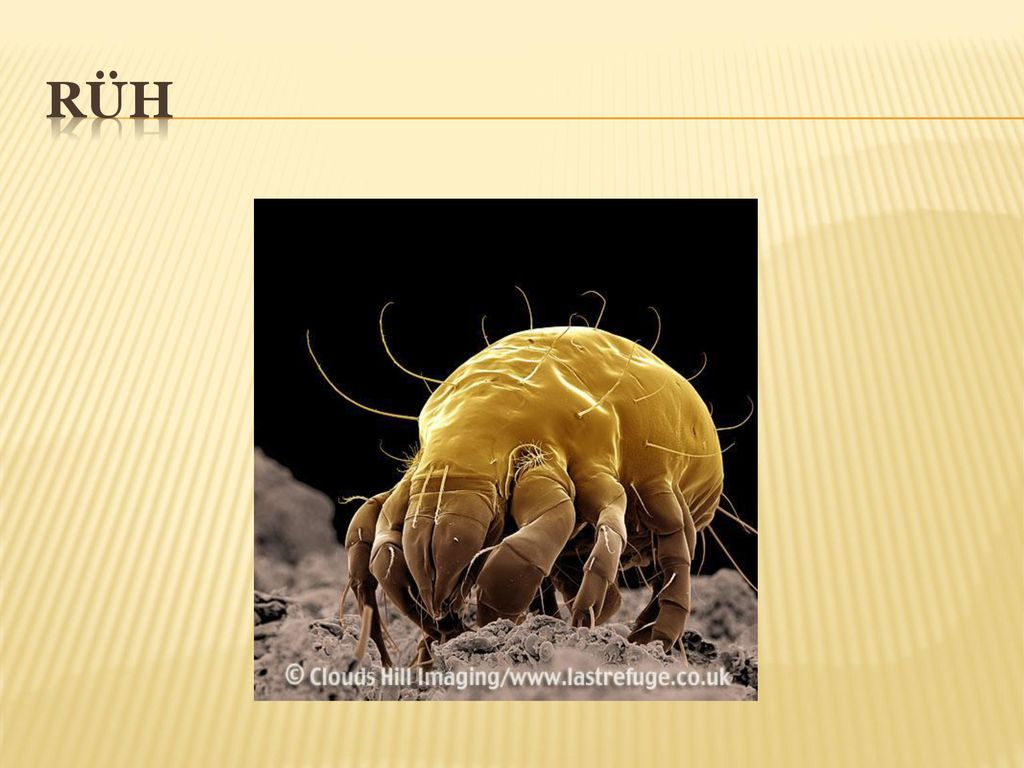 bőr paraziták uk