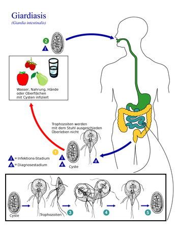 giardien symptome mensch behandlung