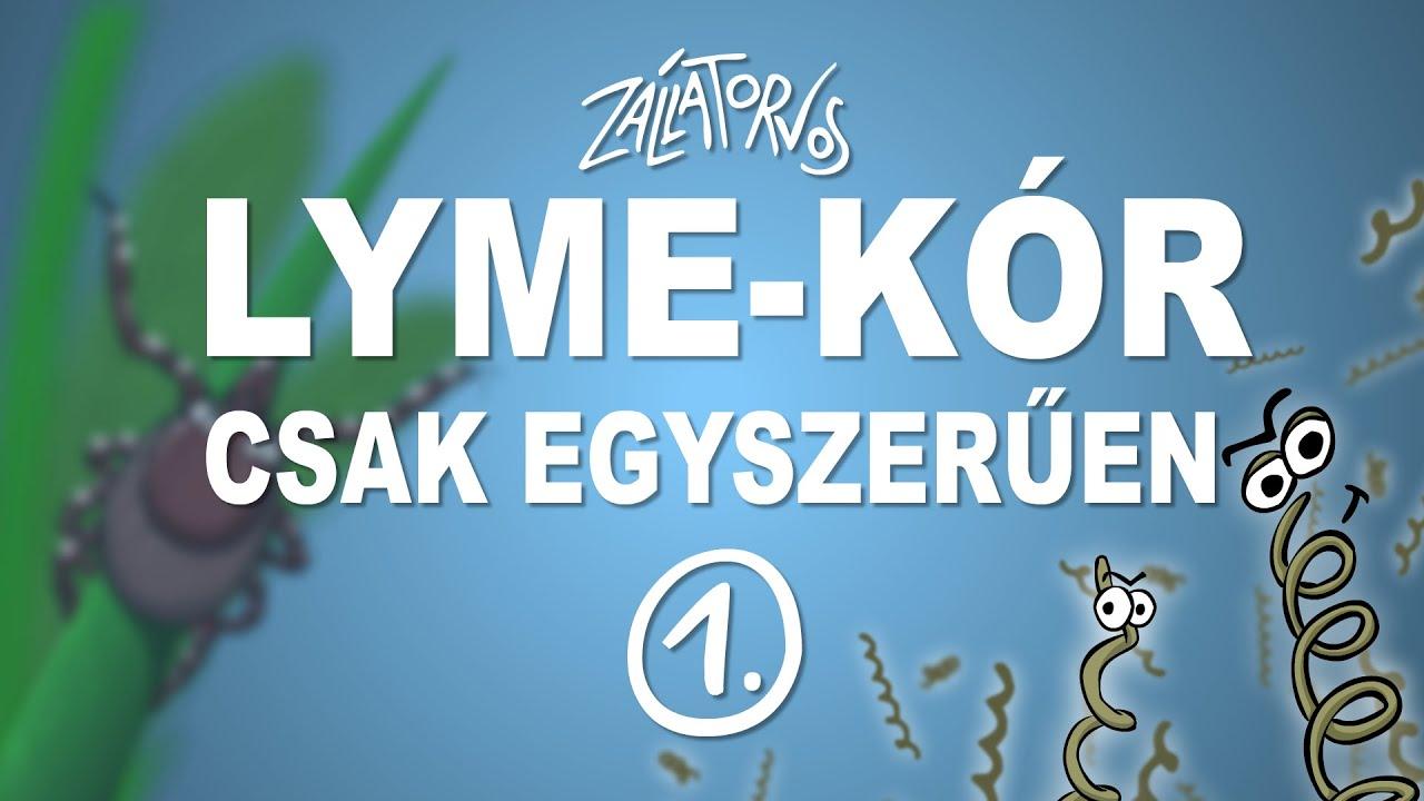 Önök kérdezték - drotosvizsla.hu