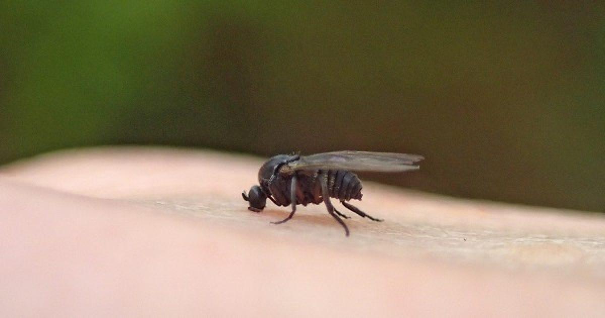 parazita rovartojásokban az emberi test paraziták a férgeket