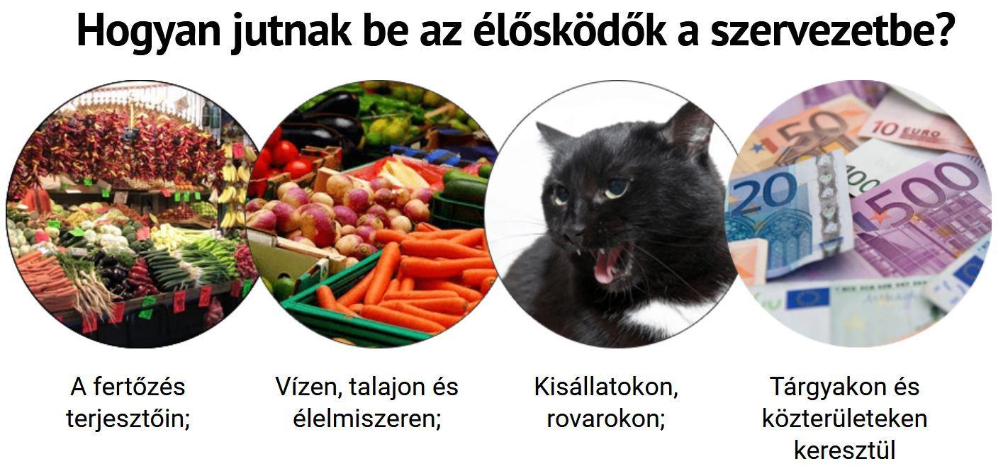 éheztetés, hogy megtisztítsa a paraziták testét)