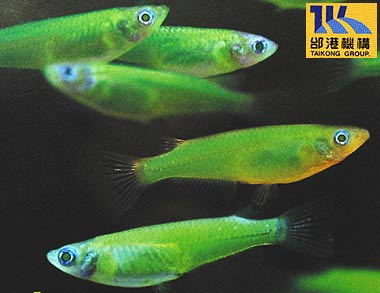 Rejtélyes féreg fertőzi a halakat | Kárpádrotosvizsla.hu